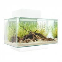 Fluval Edge 23L (6 US gal) Aquarium Set - White