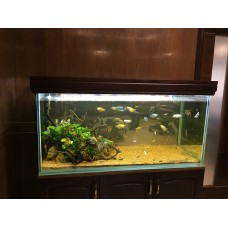 Customs Aquariums Starting ₹2000 (Only Kashmir) Complete Kits including fishes