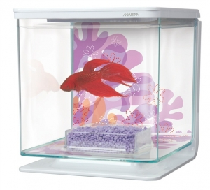 Marina Betta Kit - Flower